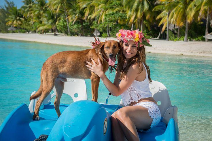 ボラボラ島の『セントレジス・ボラボラリゾート』は、ボラボラのアニマルシェルターを支援