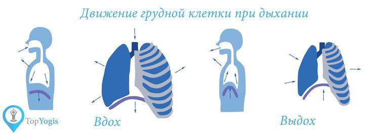 Дыхание и расширение грудной клетки. Анатомия йоги Читать полную статью на https://topyogis.com/ru/blog/anatomia-iogi/dyhanie-i-ioga