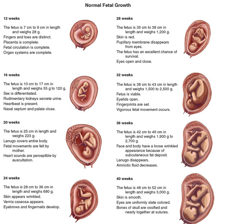 Best 25+ Prenatal Development ideas on Pinterest | Pregnancy, Baby ...