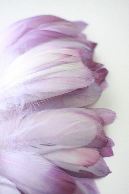 Hand-dyed purple feathers by Myra CallanColors Purple, Inspiration, Purple Feathers, Purple Passion, Lavender, Birds, Myra Callan, Flower, Colours
