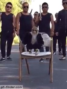Badass monkey | Gif Finder – Find and Share funny animated gifs