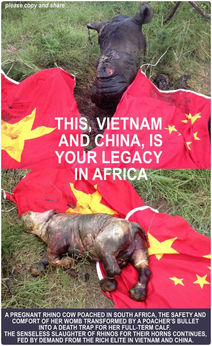 STOP RHINO POACHING NOW! - this is out of control !!