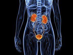 Actualiza tus conocimientos en ITU, veremos las vías urinarias en un nivel proximal al esfínter de la vejiga urinaria de microorganismos que en condiciones normales son estériles