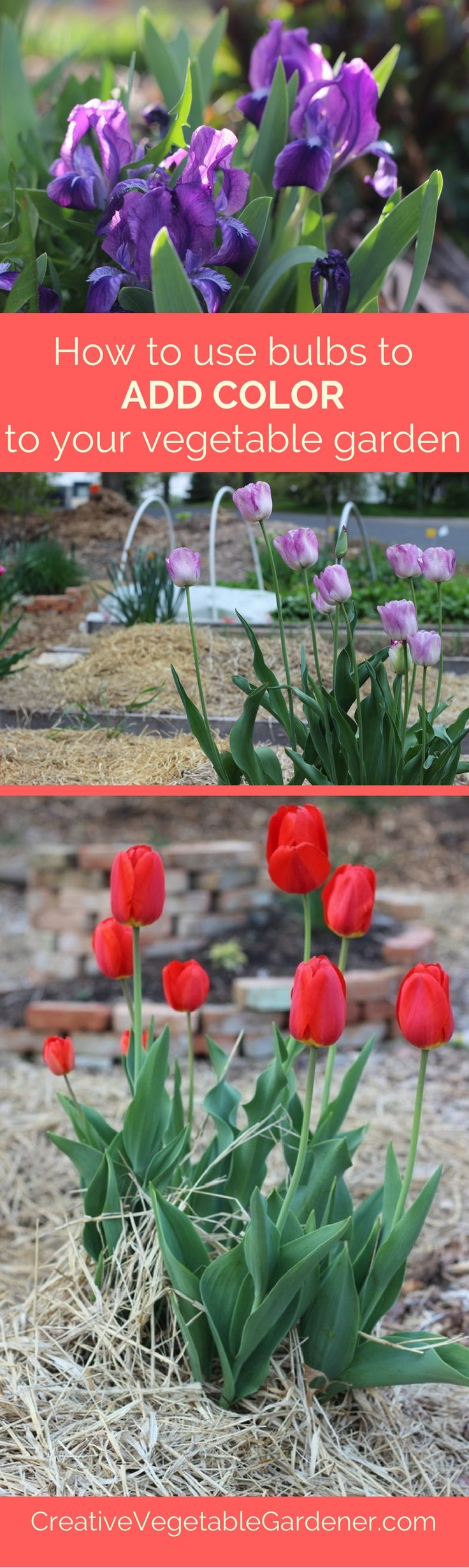 add flowers this fall for a colorful spring garden