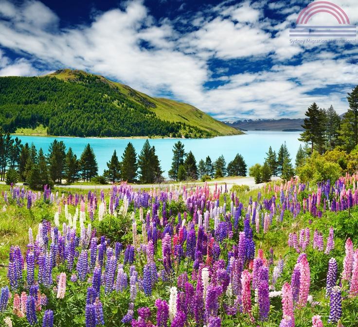 www.sydney-migration.de/auswandern-neuseeland.html | auswandern neuseeland -  Neuseelands beeindruckende Landschaften erwarten Sie