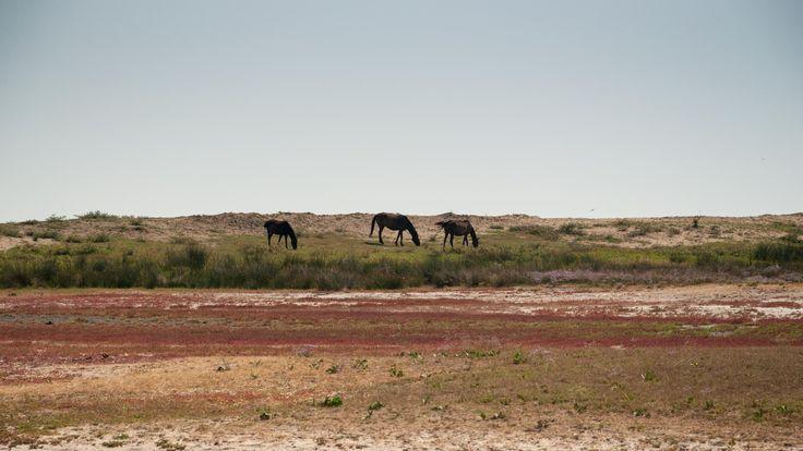 Wild horses by Fabi Nuka on 500px