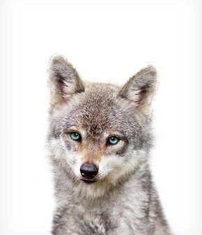 Baby Wolf druckbare Kunst