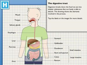 #KidAppOfTheWeek: The Amazing Digestive Journey - learn about the digestive system organs