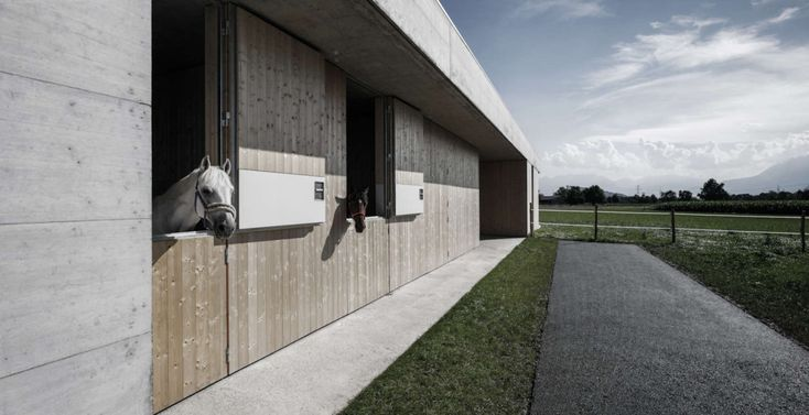 Marte.Marte Architects . Griss Equine Veterinary clinic . Rankweil (8)