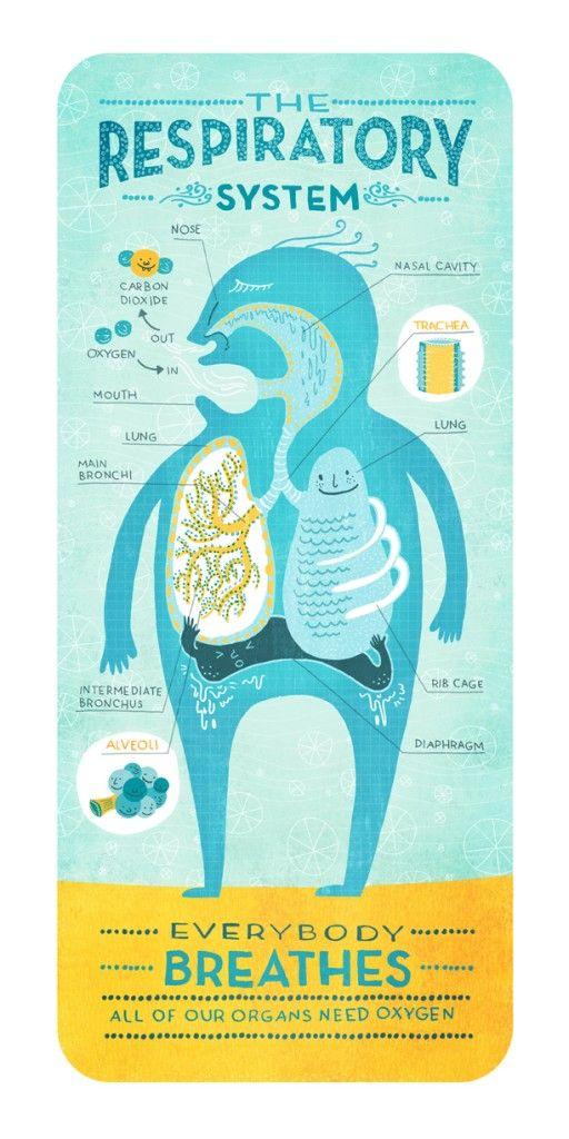 Rachel Ignotofsky_carteles infografías que explican el funcionamiento del cuerpo humano-sistemas-del-cuerpo-humano