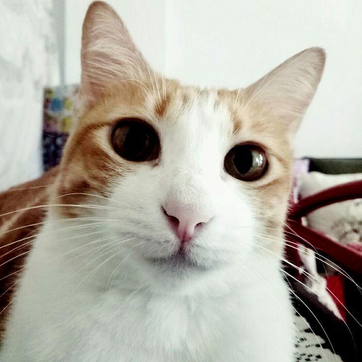I❤Cat #mycat #ilovecat #catlovers