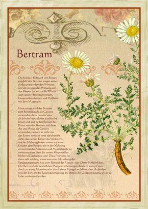 Bertram … Mehr