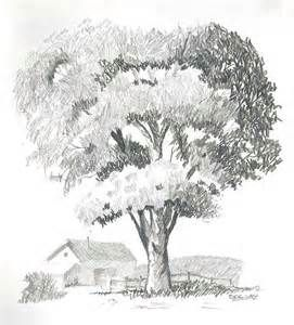 tree drawings in pencil