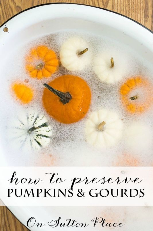 How to Preserve Pumpkins & Gourds for your Fall decorating.   Simple way to make them last for weeks!
