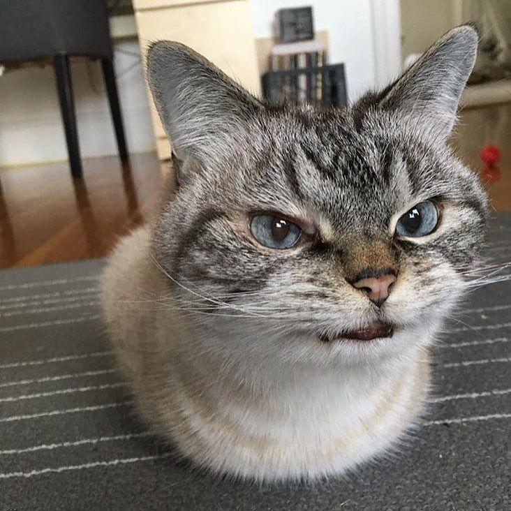 Демотиватор удивленного кота