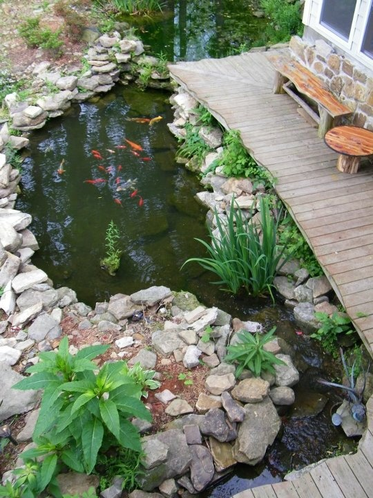 33 best images about decks and koi ponds on pinterest for Koi pond deck