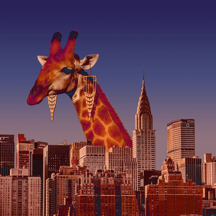 Coolest Giraffe ever by #CatalinaD'Anglade