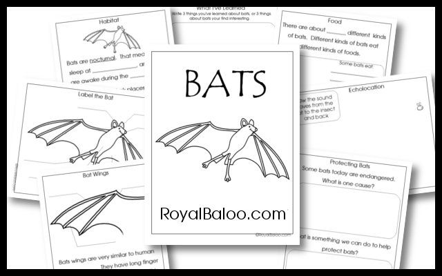 386 best images about stellaluna  bats on pinterest