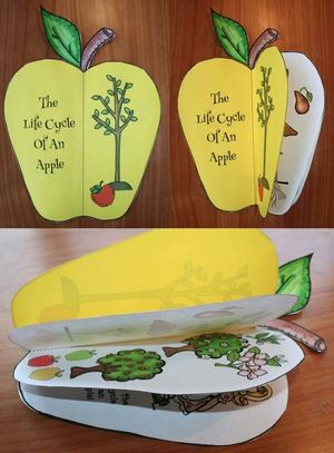"Apple activities: ""Life Cycle of an Apple"" shape booklet. Just 2 pages long. Quick, easy & fun. So cute!  :-)"