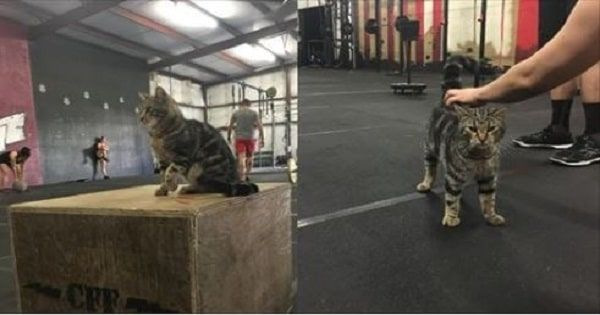 GALLERY: Cuddly Cat Comes In Everyday To Help Motivate Gym Members!