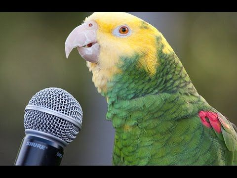 Parrot talking and singing so cool | Best Parrots Talking video