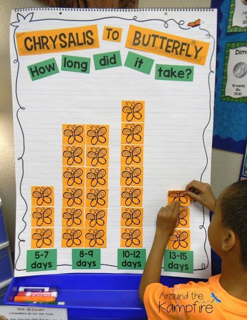 See how we integrated butterfly math into our life cycle study by graphing the the life cycle of butterflies from start to finish using bar graphs, pictographs, and line plots. We also incorporated calendar skills as students recorded changes in observation journals then added them to their calendar to make it visually easier to see and count the days for each stage. Be sure to grab the measurement FREEBIE in this post.