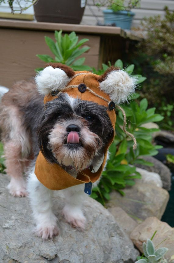 Lily will so look like an E-wok in this!  Leather dog hood size small or medium by sewdoggonecreative, $19.99