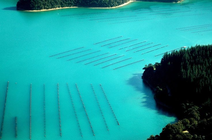 Mussel Farms in the Marlborough Sounds near Picton