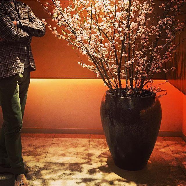 【hello_papico_214】さんのInstagramをピンしています。 《いつも美味しい物を食べさせてくれたりいろんな所に連れて行ってくれてありがとう💕 結婚記念日にシェラトンにて綺麗な桜🌸とイラッとするポージングの主人🙄 #結婚記念日 #aniversary #サクラ#桜#cherryblossom #シェラトン#sheraton#鉄板焼き#dinner #ディナー#いつもありがとう#ありがとう#thankyou #イラっとする#ポージング#family #主人#旦那#hallo_papico_214 #お出かけ#外食#lardini》