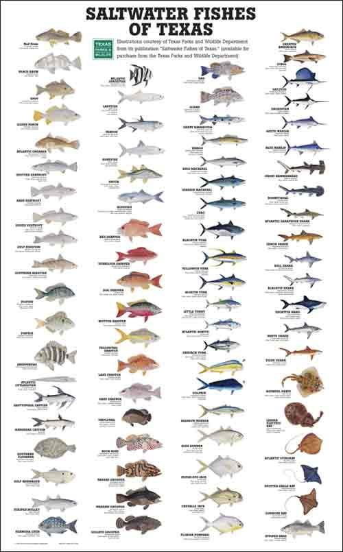 19 best fishing info images on pinterest fishing peach for 7 fishes list