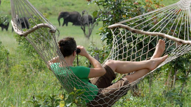 Botswana Wildlife | Bench Africa