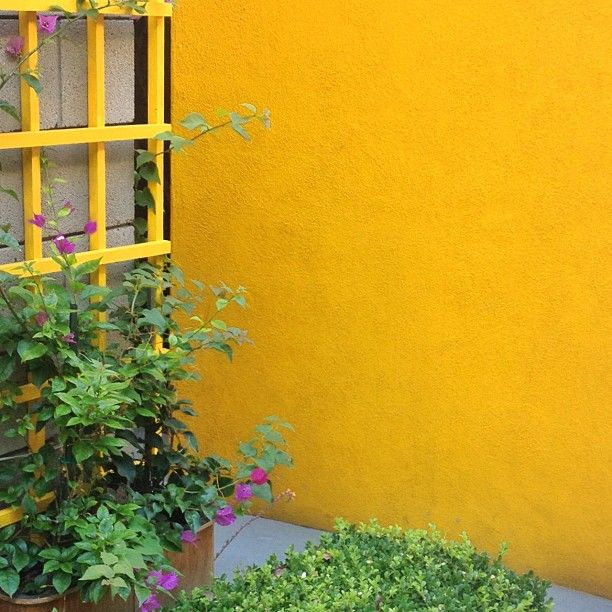 yellow Photo by @happymundane • InstagramGardens Colours, Yellow Photos, Mellow Yellow, Groovy Gardens, Jonathan Nafarret, Outdoor Exterior, Gul Yellow, Exuberance Colors, Colors لون