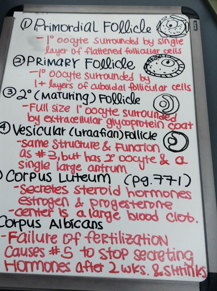 The Ovarian Cycle How to pass exams, Ovarian, Nurse life
