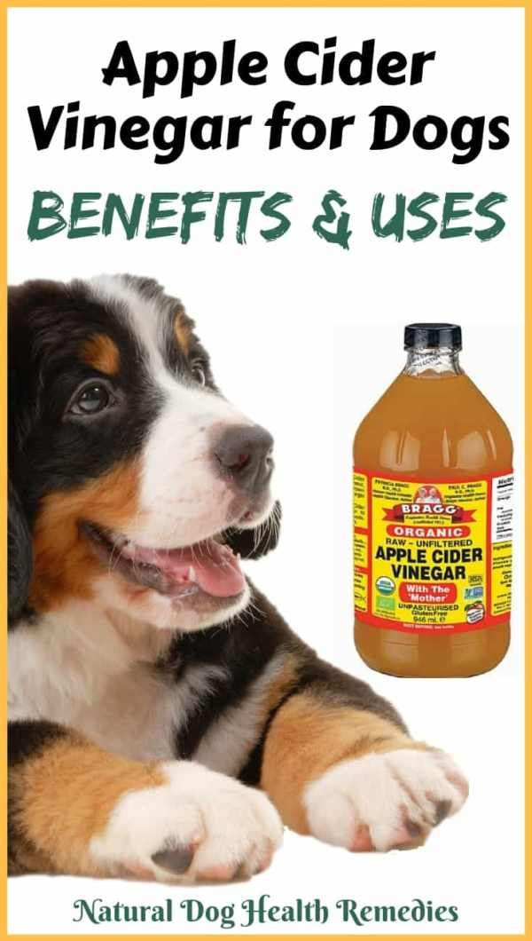 Apple Cider Vinegar For Dogs With Images Apple Cider Benefits