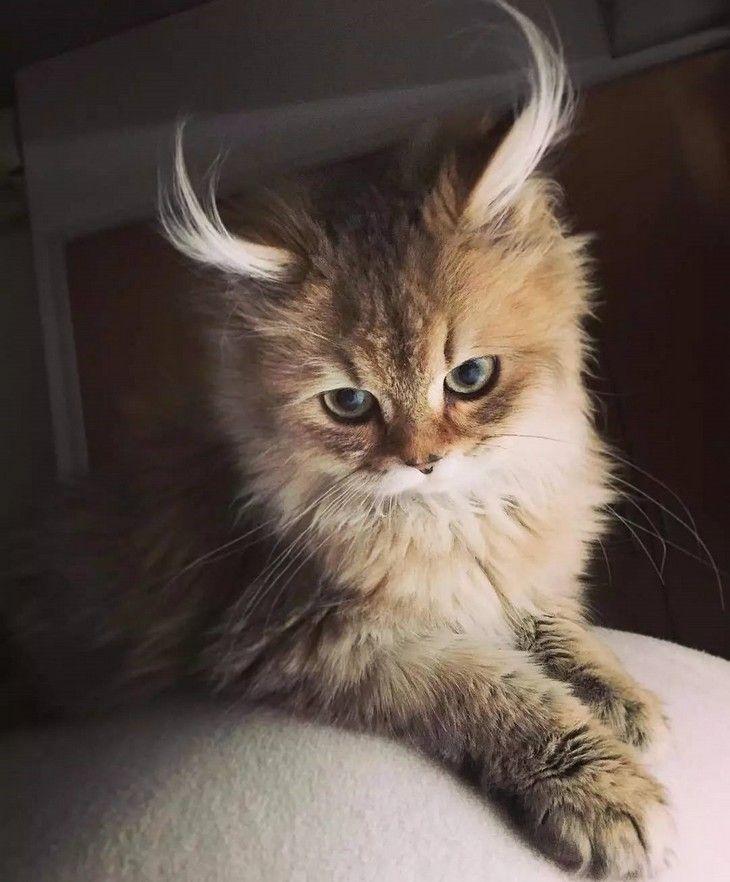 Tanto si eres amante de los gatos como si no, te rendirás a los encantos de estos felinos y no podrás escapar sus cautivadoras miradas. ¡Estos gatitos son tan adorables que no parecen reales!