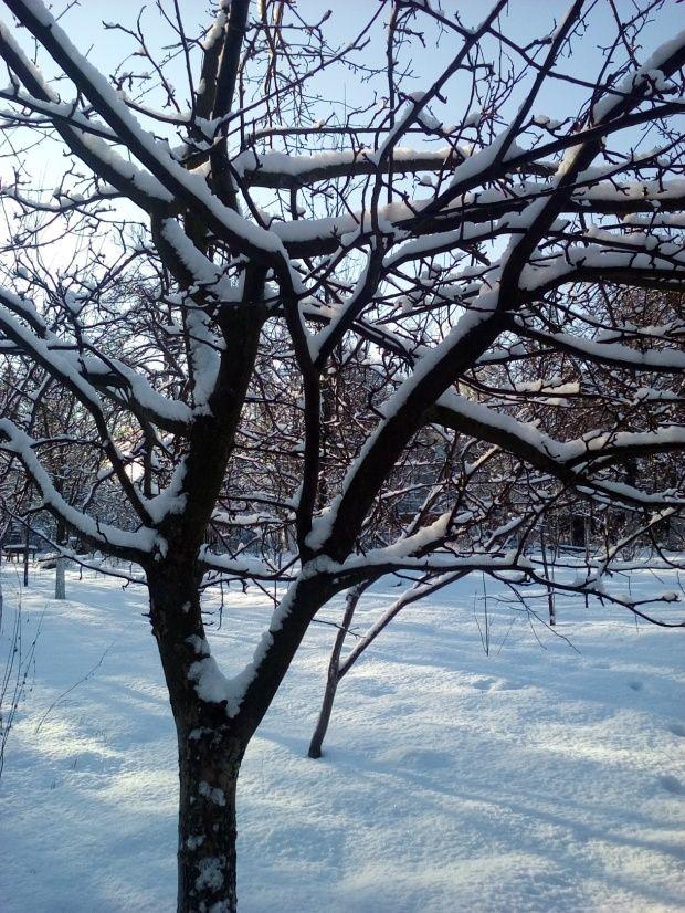 Zima w Polsce/Winter in Poland, Natura 15 236 (autor: jlez)