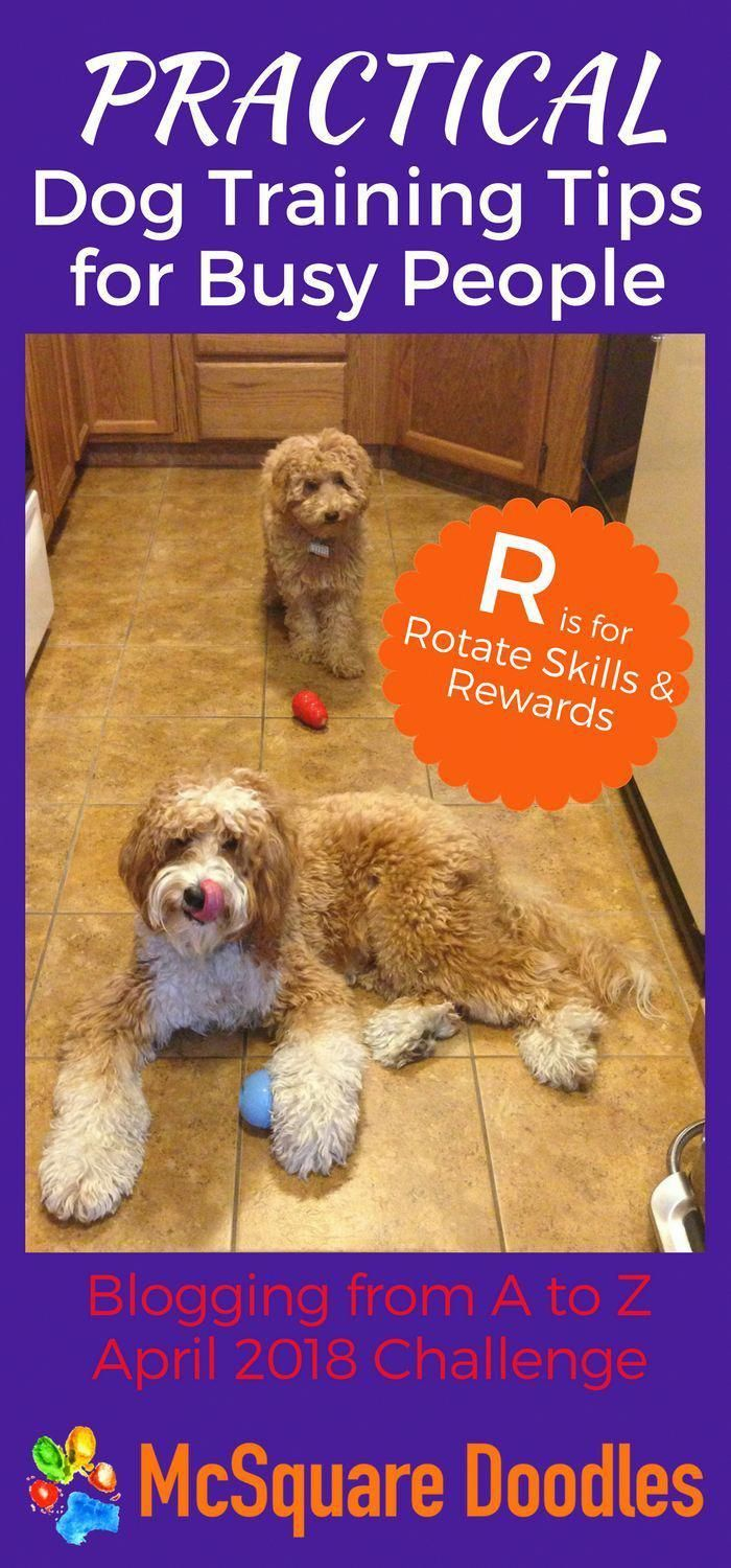 First Class Understudied Dog Food Tips Get Started Dog Training