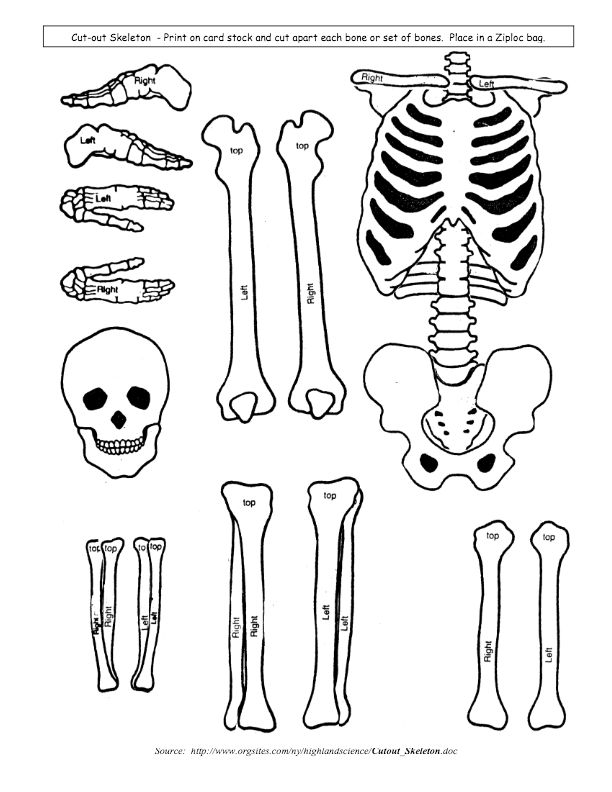Skeletal System Model Cut Outs For Children Kids Students Learning