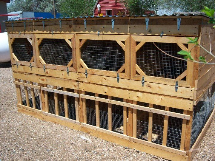 Gamefowl Pens And Boxes: Show Chicken Conditioning Pens