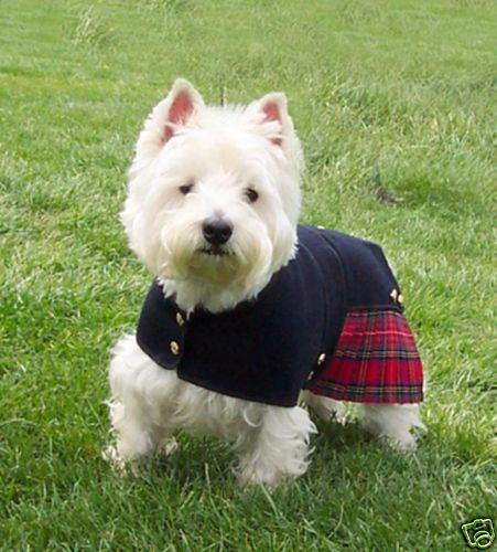 Turn your Westie into a proper 'Scot' and help Westie Rescue Michigan at the same time. Kilts for sale on ebay http://www.ebay.com/itm/KILT-COAT-ROYAL-STEWART-12-INCH-30CM-FREE-SHIP-USA-/150925759493?pt=LH_DefaultDomain_0=item2323e05405