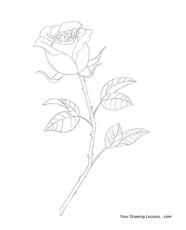 105 best images about drawing flowers on pinterest step Teach me how to draw a flower