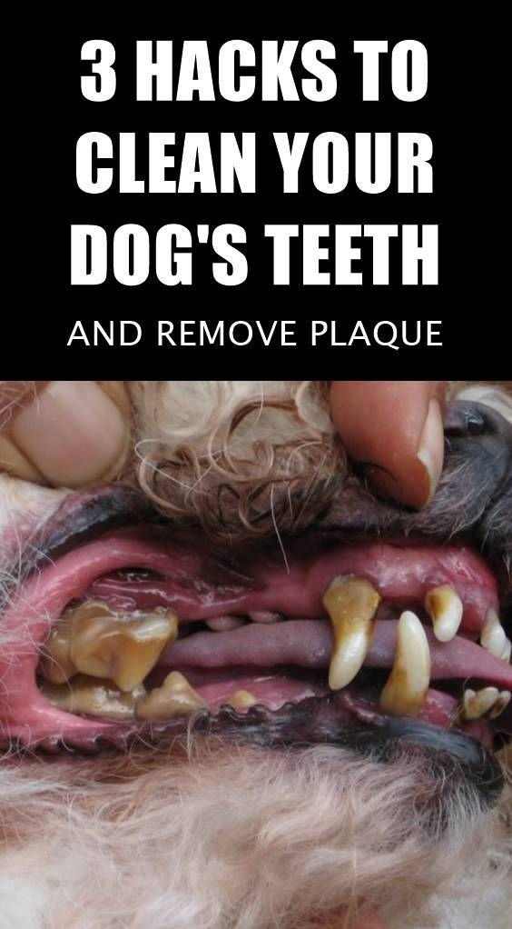 Wondering How To Remove Plaque From Your Dog's Teeth At