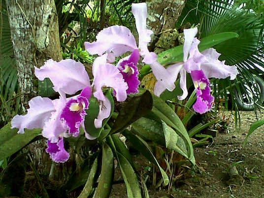 Orquídeas finca mira valle Restrepo valle del Cauca colombia