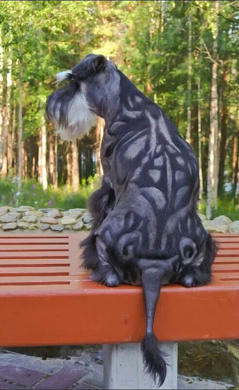 Schnauzer Sue, I agree. I love schnauzers & only saved it to remind me what some people do to their pets. Sheryl