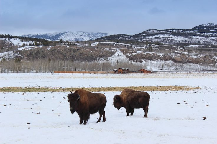 Day trips from Whitehorse, Yukon, Canada