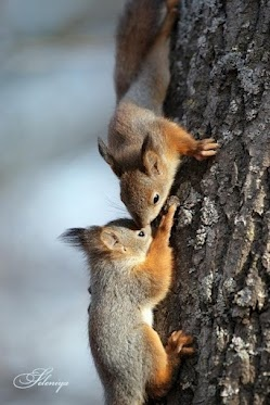Squirrels :) Dad always you to hunt these cute things, and mom tried to trick me into eating.