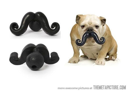 Because your dog needs to look more distinguished…: Dogs Toys, Mustaches Dogs, Dogs Gift, Dogs Stuff, Bulldogs, Dogtoys, Dogs Care, Dog Toys, So Funny