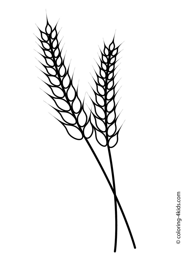 Nature Wheat coloring page for kids printable free