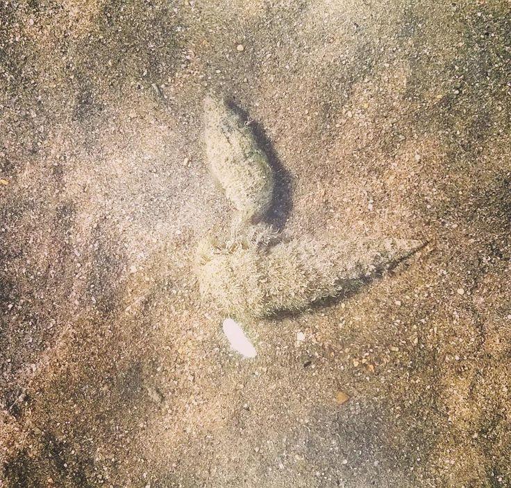 #mare #sole #sea #relax #love #italy #happy #blu #sky #onde #beautiful #ontheroad #travel #road #nature #clouds #life #morning #natura #primavera #paguri #sabbia #sun #spettacolo #bellezza #igersitalia #pace #beach #amore #holiday by angyfreesh http://bit.ly/AdventureAustralia