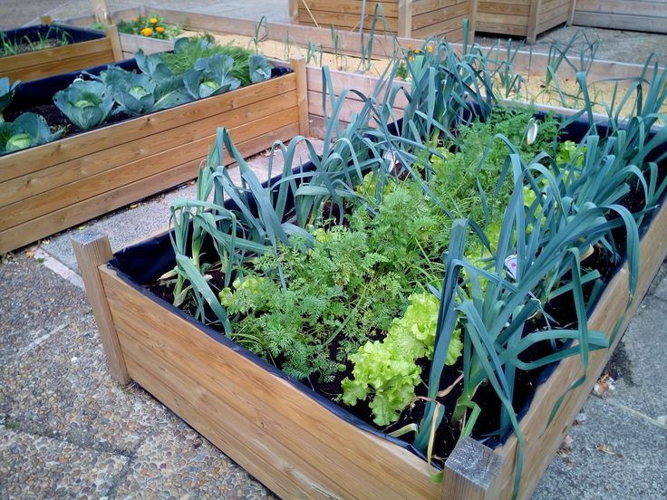 Best Nontoxic Containers for Ve able Gardening ContainerGardening If you re interested in growing ve ables